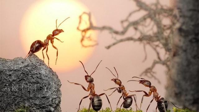 Học lãnh đạo từ loài kiến